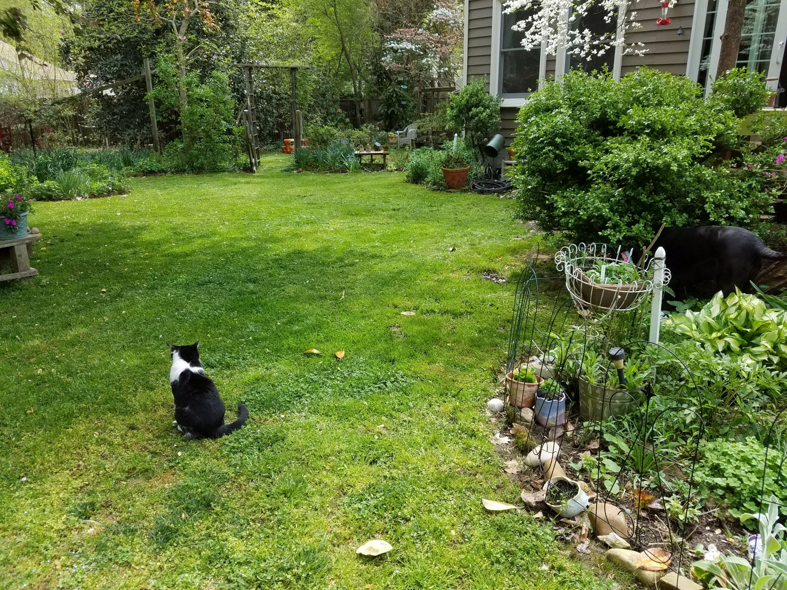 a garden with a black and white cat lounging