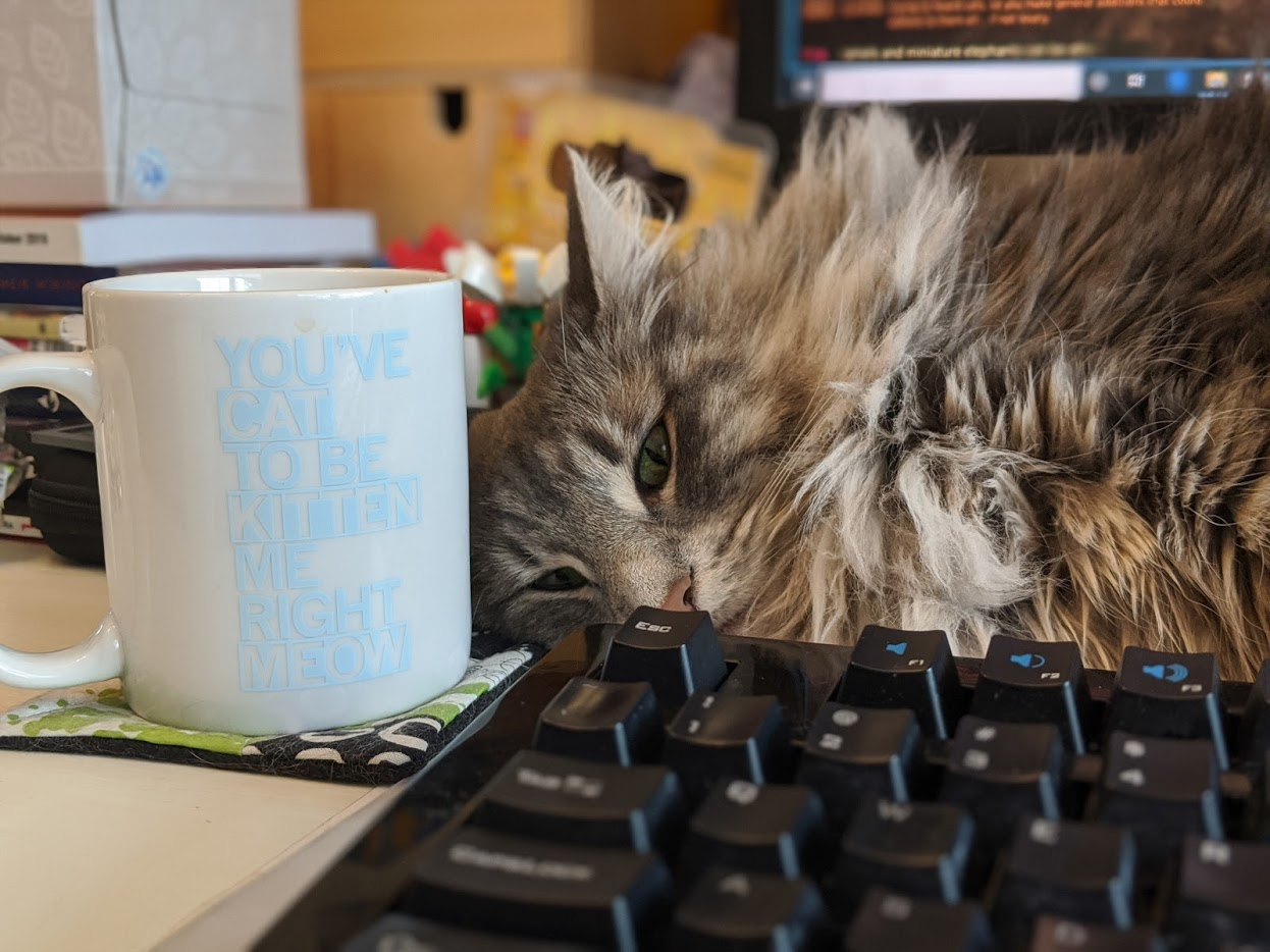 grey, orange and white cat stretched infant of a keyboard