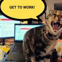 "A picture of a cat sitting on a keyboard yawning widely with a text bubble that reads, ""get to work!"""