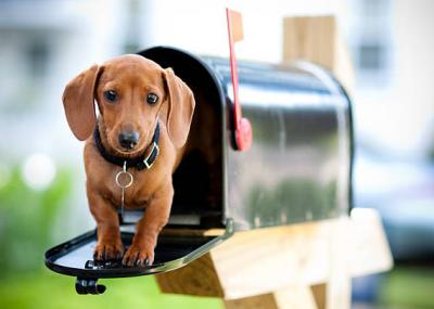 puppy dog standing in mailbox